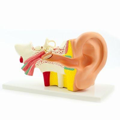 Ohr Modelle