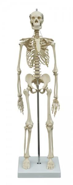 Mini Skelette