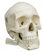 Basis Schädel
