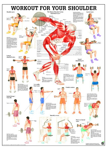 Workout for your back 50 x70 cm