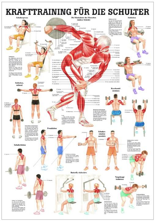 Krafttraining für die Schulter
