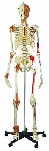 Das Best of Rüdiger-Skelett