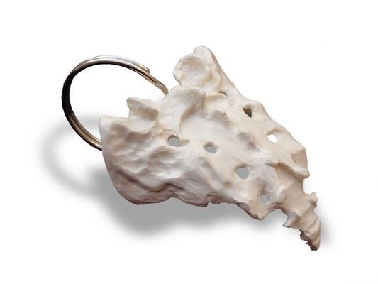 Schlüsselanhänger Steißbein