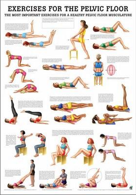 Exercises for the pelvic floor, englisch, 50 x 70 cm, papier