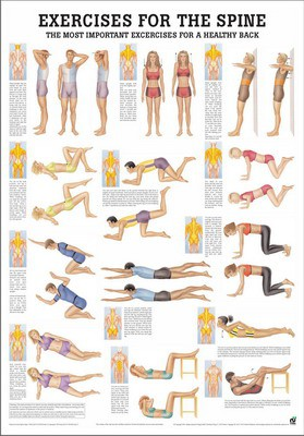 Exercises for the spine, englisch, 50 x 70 cm, papier