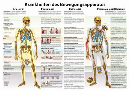 Krankheiten des Bewegungsapparates
