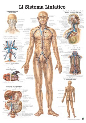 Il Sistema Linfatico