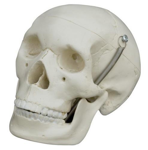 Mini-Schädel