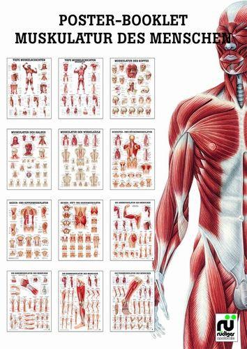 Miniposter - Booklet 02 Muskulatur