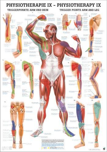Triggerpunkte Arm und Bein