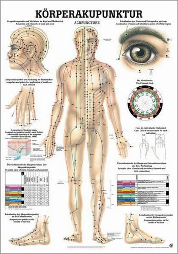 Körperakupunktur, 50 x 70 cm, laminiert