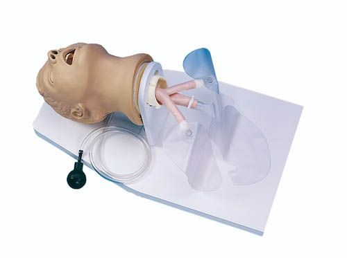Intubationstrainer Erwachsener