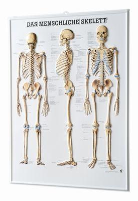 Relieftafel - Skelett