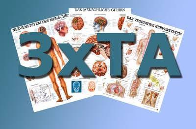 Anatomische Lehrtafeln - Tafel-Set 1