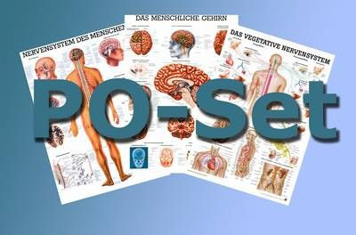 Basis der Anatomie, 50 x 70 cm, papier