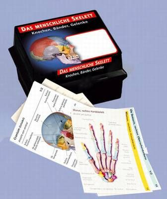 Skelettsystem in Lernkärtchen