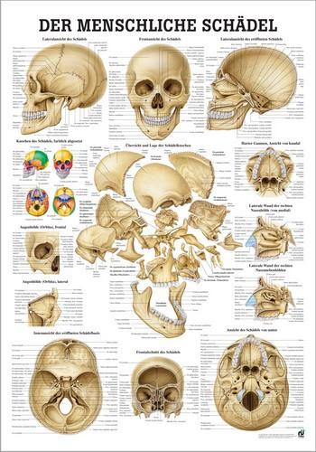 Die Schädelknochen des Menschen, 24 x 34 cm, papier