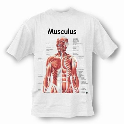 T-Shirt Muskeln