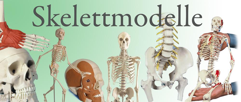 Skelettmodelle
